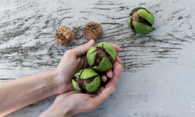 Eat nuts to stave off sneaking weight gain