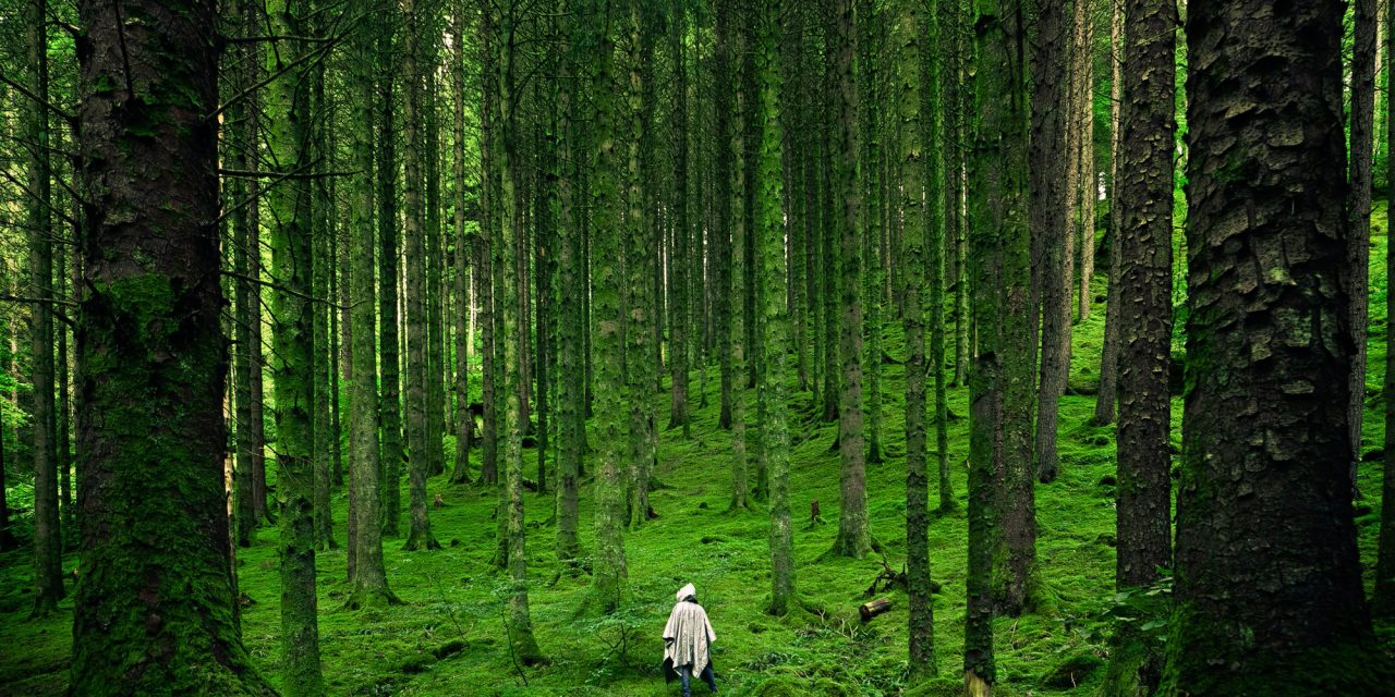 Being in nature is good for you – and the planet
