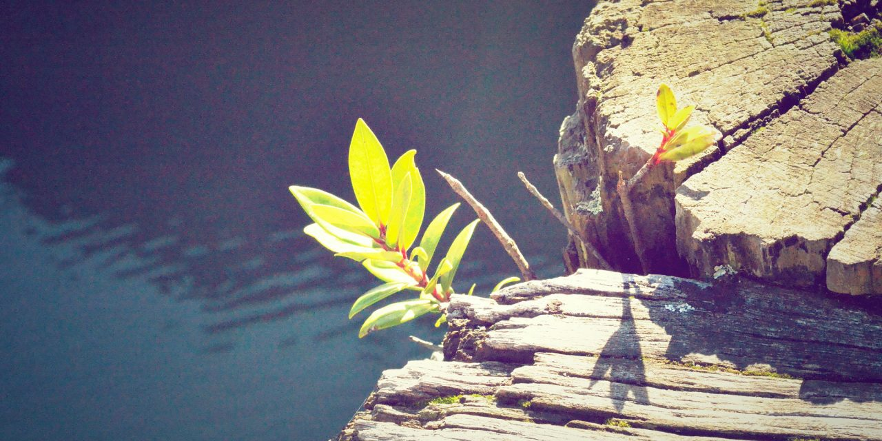 Having hope boosts wellbeing in later life